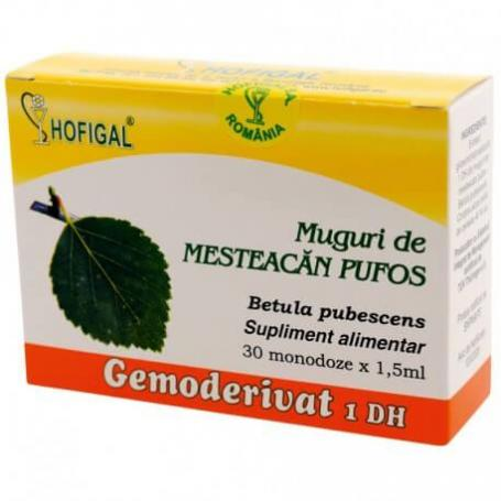 Muguri de Mesteacan pufos Gemoderivat, 30 doze, Hofigal