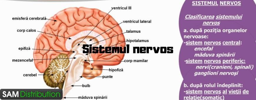Tratamente si produse naturiste pentru afectiuni ale sistemul nervos